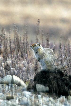 Alaska Nature - Wildlife and Landscapes